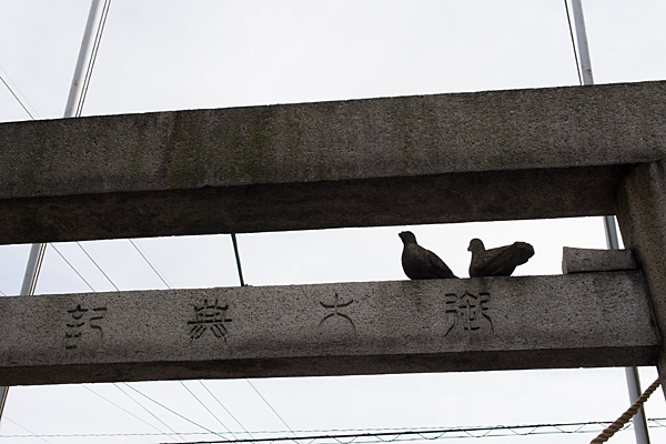 南押切神明社鳥居の上の鳩