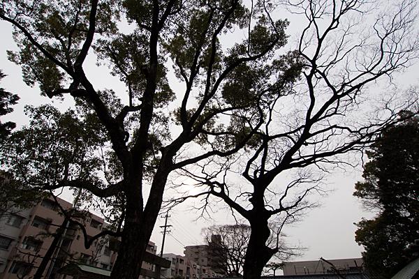 上飯田六所宮境内の木々