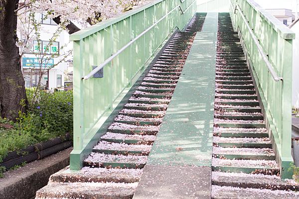 水道道歩道橋と桜絨毯