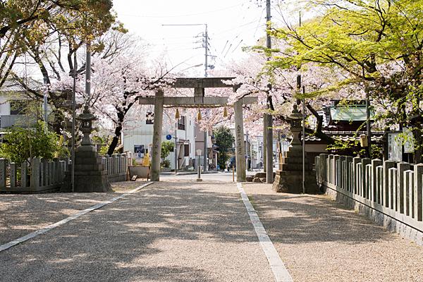 富部神社境内と鳥居と桜