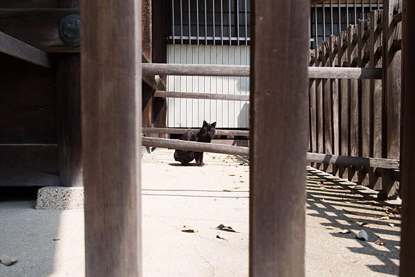 桜神明社にいた黒猫