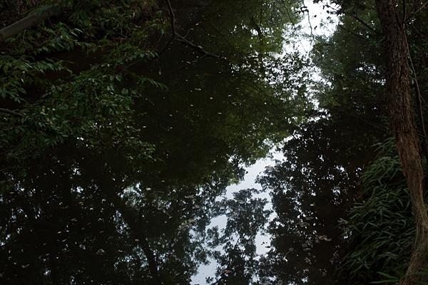 水面と枝木