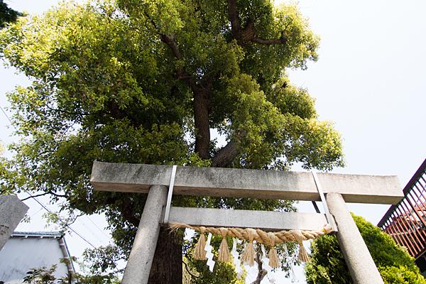 石神社鳥居と御神木