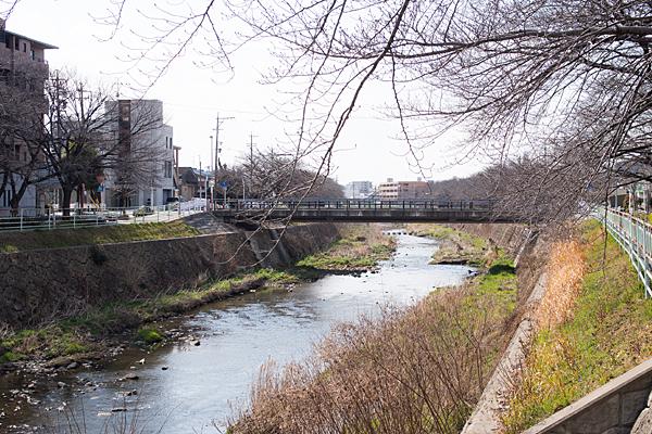桜前の香流川と中島橋の風景