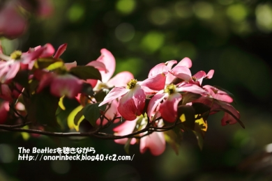 IMG_2017_04_28_9999_206.jpg