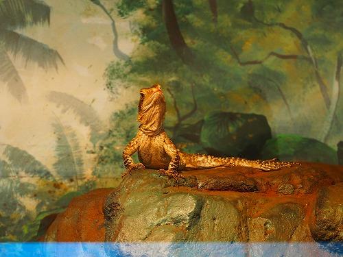 フェザーデールワイルドパーク動物園