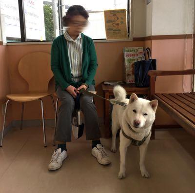 2017狂犬病予防接種
