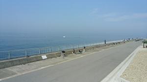 豊浜釣り3