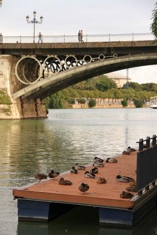 2463 Puente de Isabel II