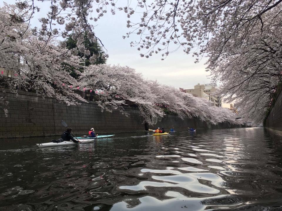 桜メインロード