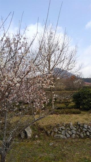 2017_03_30_三多気の桜_058_2017_04_19