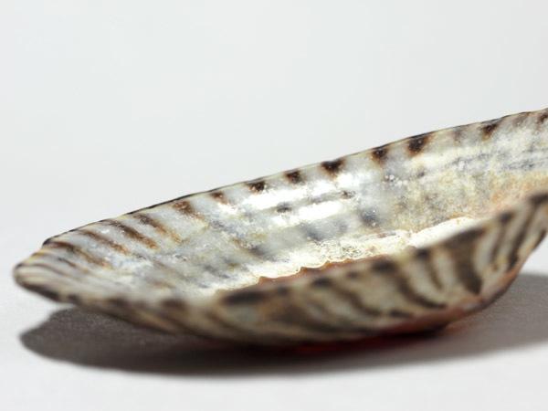 shell01 (1)