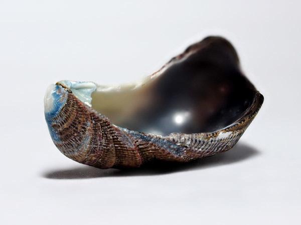 shell01 (3)