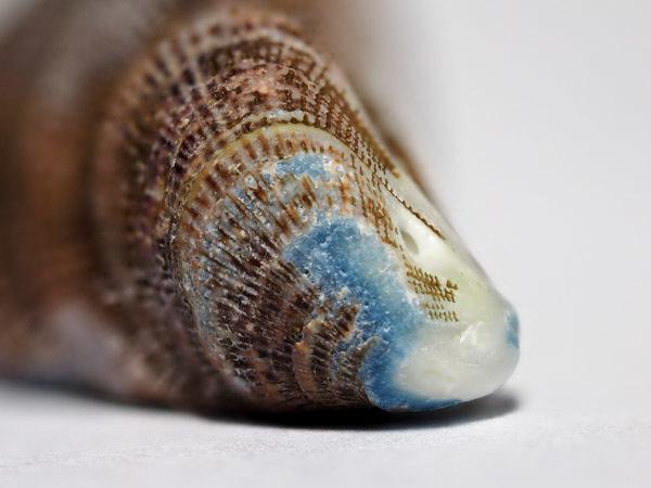 shell01 (4)