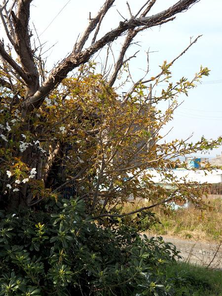 chigasaki55687 (2)