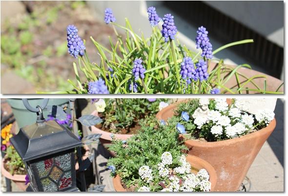 花壇の鉢植え
