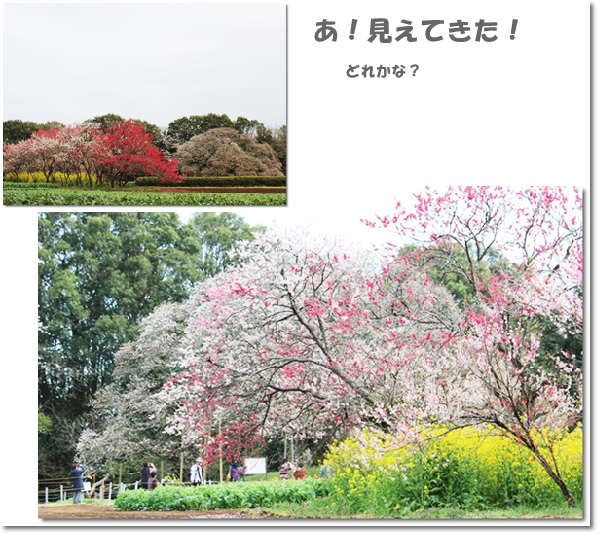 吉高の大桜で2-2