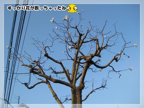 IMG_8410-3.jpg