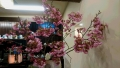 20170402ピトンの桜