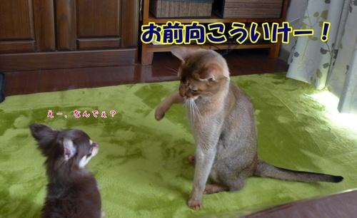 猫パンチだめよ