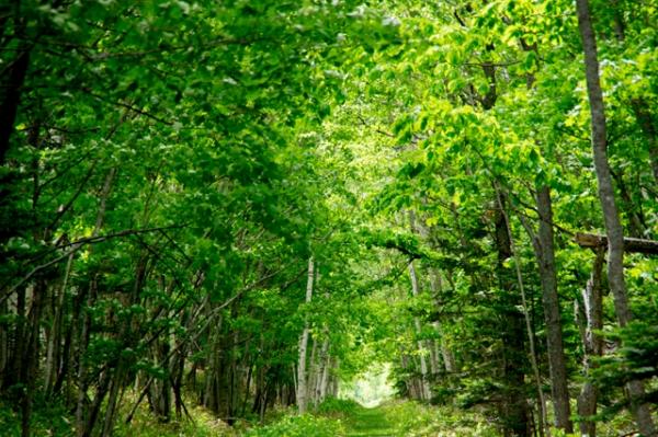 線路跡の森