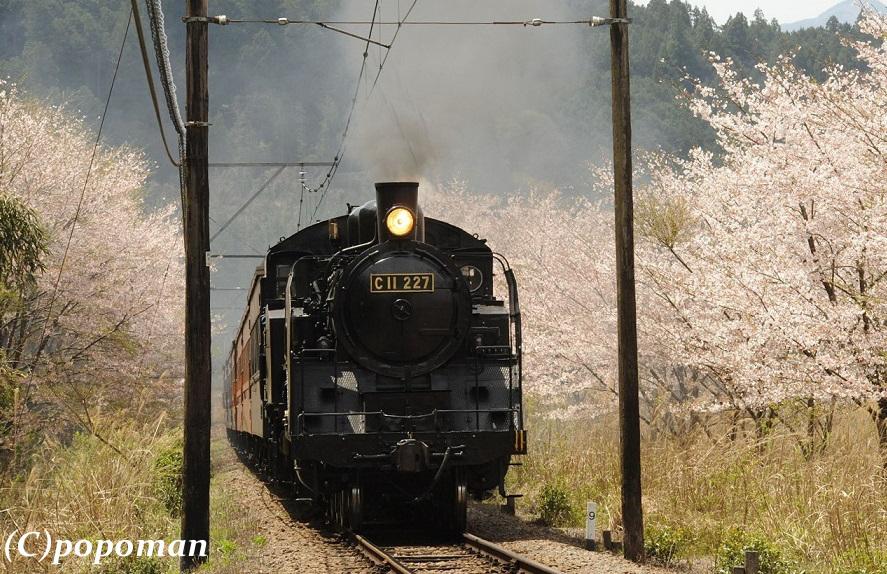 DSC_7527 - コピー2017 4 16 大井川鐵道 田野口~駿河徳山 580 回転 トリミング popoman