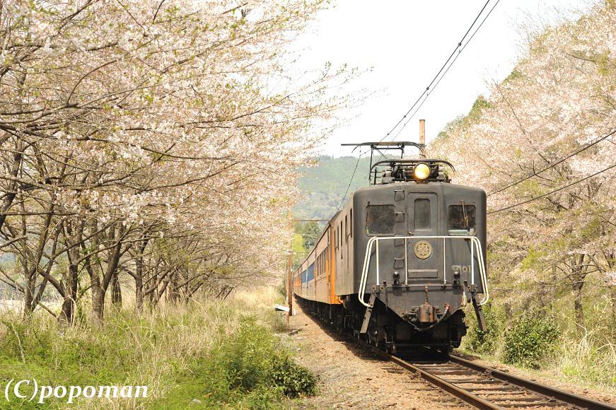 DSC_7593 - コピー2017 4 16 大井川鐵道 駿河徳山~田野口 871 580 popoman