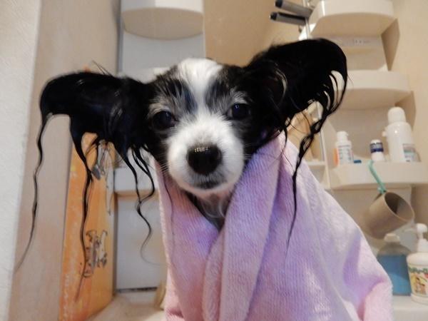 石鹸で洗ったよ