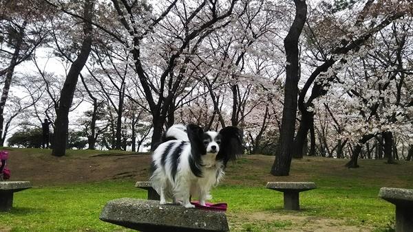 桜をバックに2