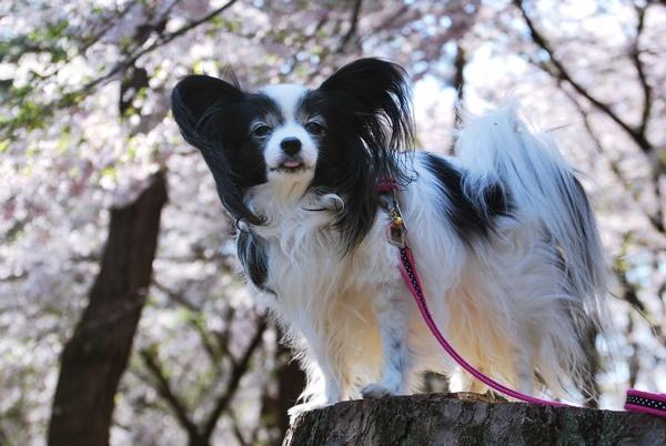 桜色に染まる2