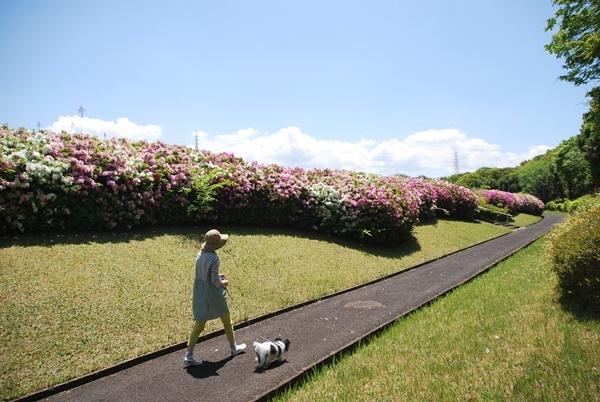 公園墓地をお散歩