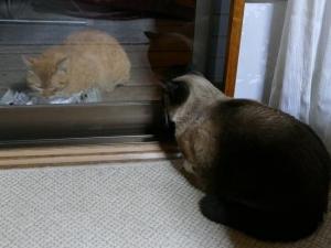 おはなと虎太郎