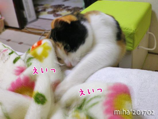 miha17-02-131.jpg