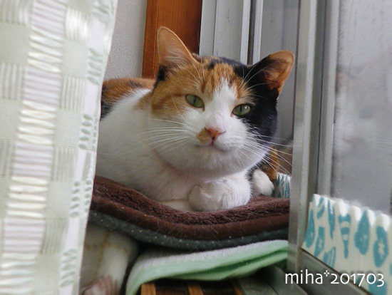 miha17-03-53.jpg