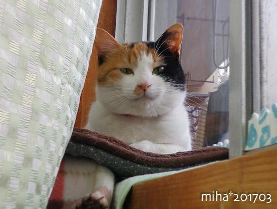 miha17-03-57.jpg