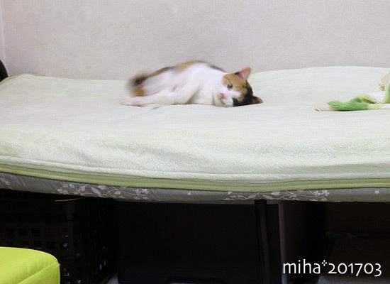 miha17-03-65.jpg