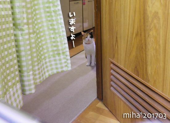 miha17-03-78.jpg