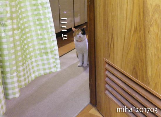 miha17-03-79.jpg