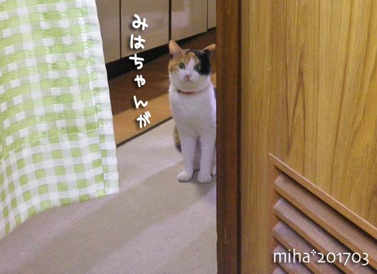miha17-03-80.jpg