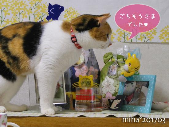 miha17-03-98x.jpg