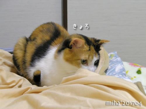 miha17-04-141.jpg