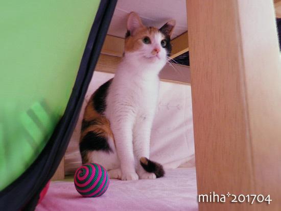 miha17-04-240.jpg