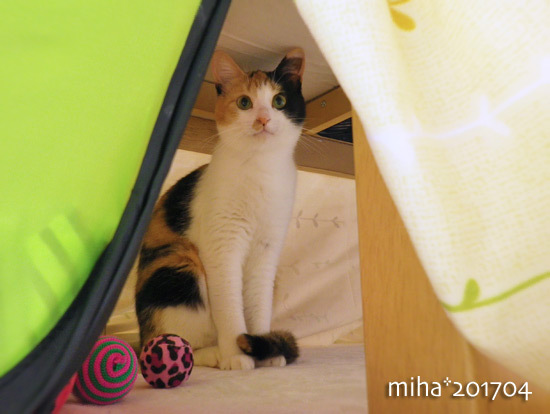 miha17-04-245.jpg