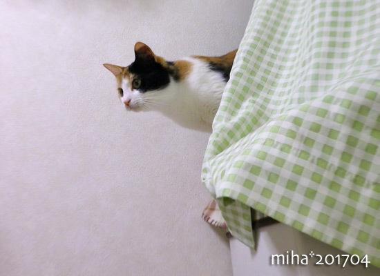 miha17-04-56.jpg