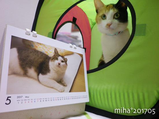 miha17-05-08.jpg