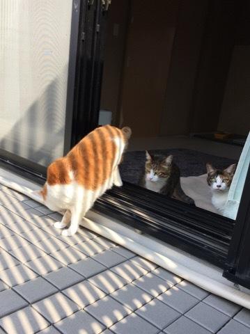 猫の庭出てみる