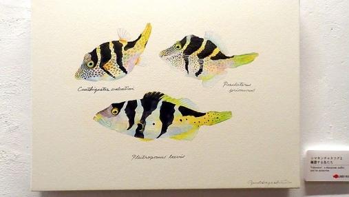魚の肖像Ⅱ 2017-05-02 (22)