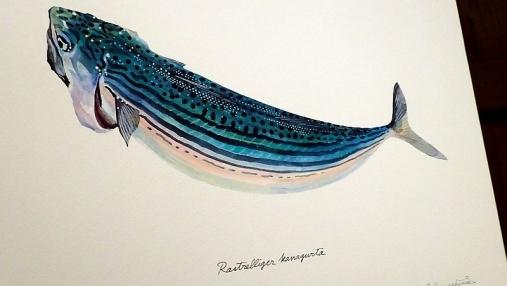 魚の肖像Ⅱ 2017-05-02 (18)