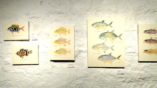 魚の肖像Ⅱ 2017-05-02 (27)