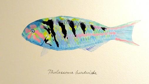 魚の肖像Ⅱ 2017-05-02 (15)